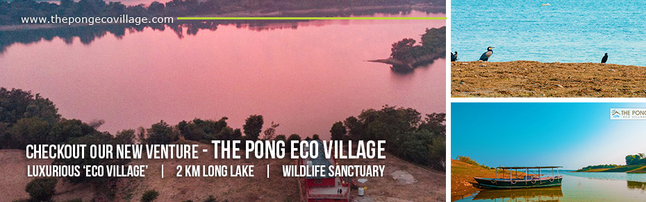 The Pong Eco Village - New Venture